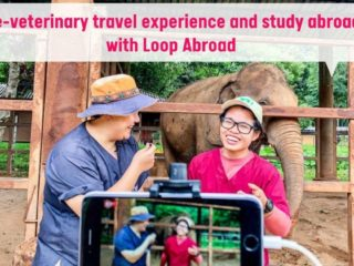 Pre-veterinary travel experience and study abroad with Loop Abroad by I Love Veterinary