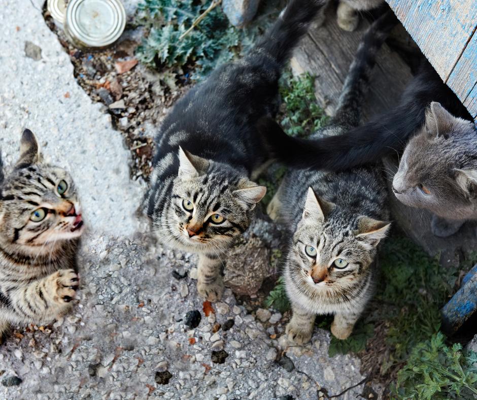 Animal hoarding - many cats