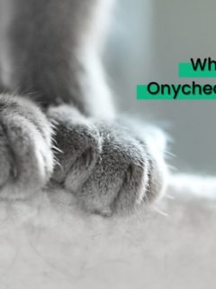 Why Feline Onychectomy is bad - I Love Veterinary