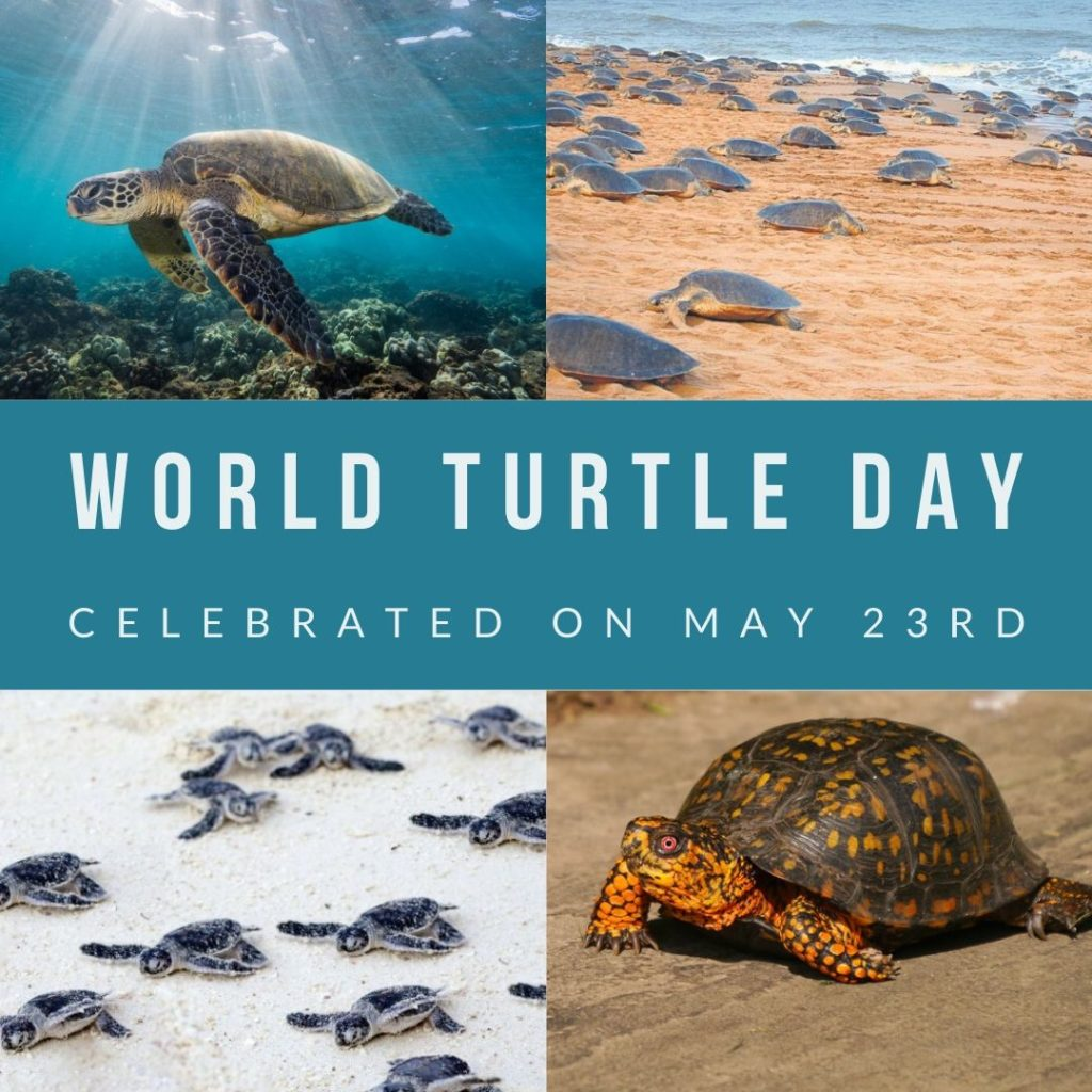 world turtle day banner