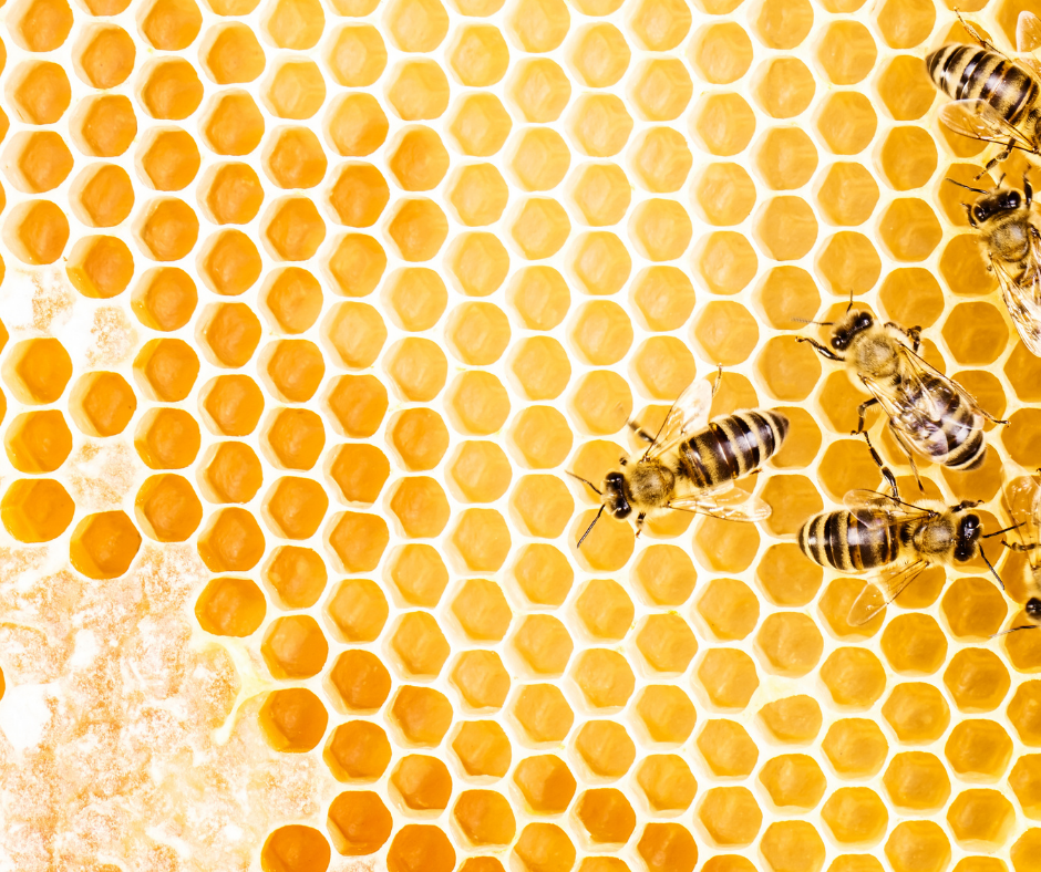 bees sitting on honeycomb I Love Veterinary - Blog for Veterinarians, Vet Techs, Students