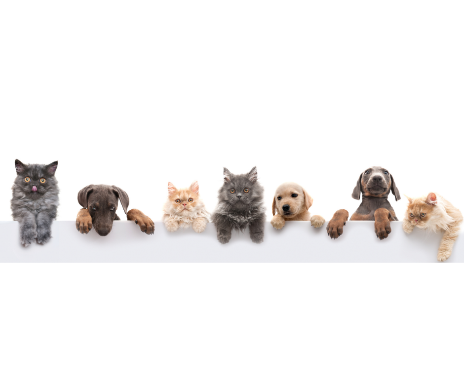cats and dogs sitting in a row I Love Veterinary - Blog for Veterinarians, Vet Techs, Students