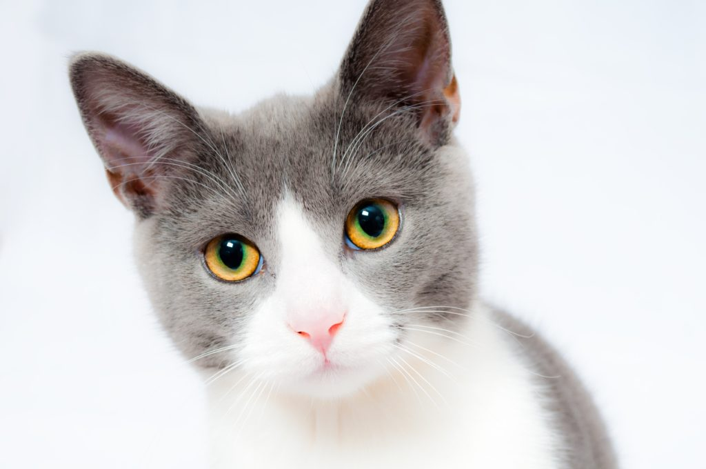 Mirtazapine for Cats - for Appetite Stimulation