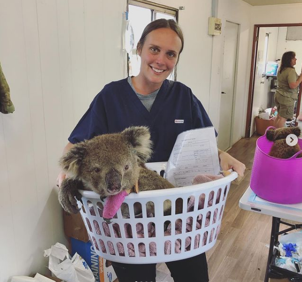 Dr. Chloe Buiting with koala in vet clinic - I Love Veterinary