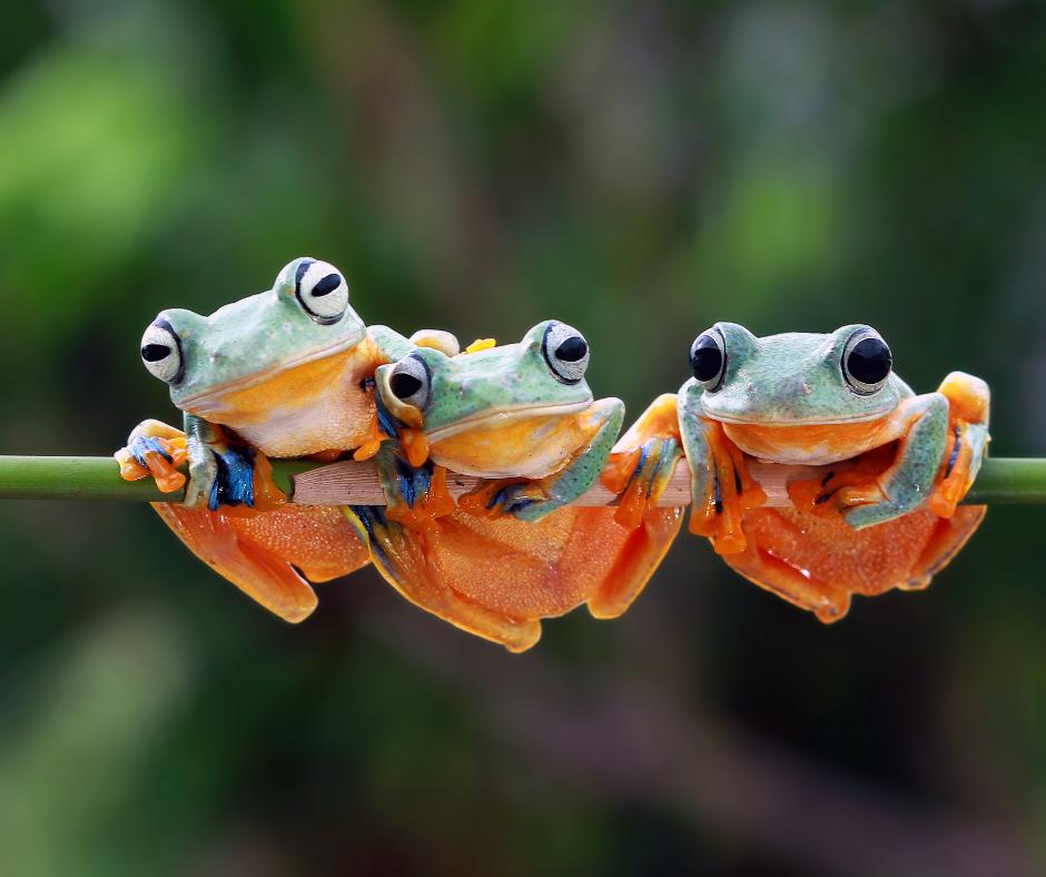 three froglets sitting on a green branch