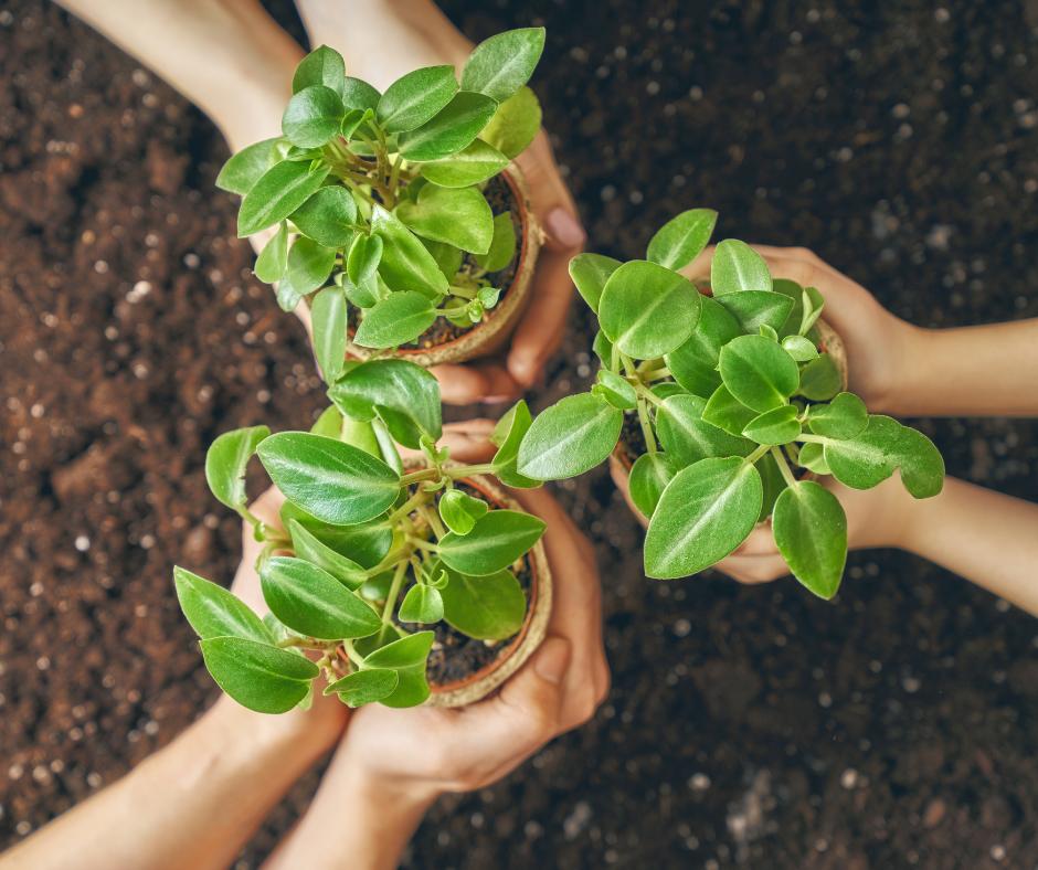Three pairs of hands holding three potplants