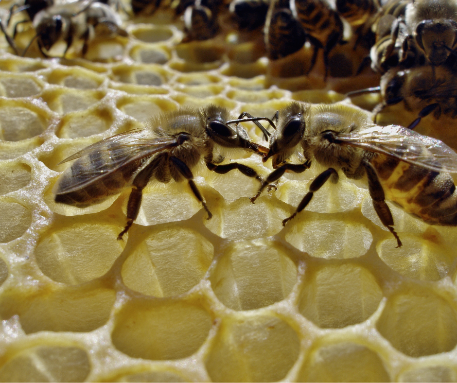 two bees communicating I Love Veterinary - Blog for Veterinarians, Vet Techs, Students