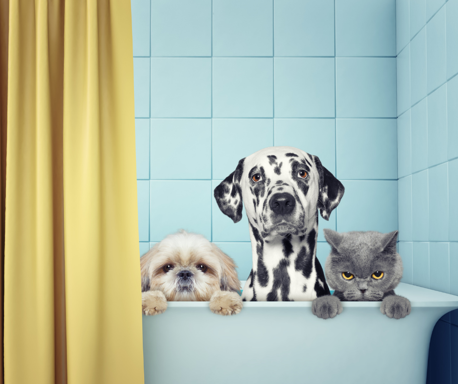 two dogs and a cat sitting in a bathtub