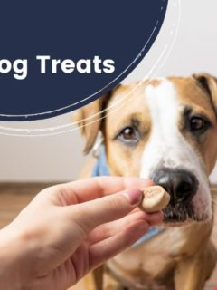 10 best Calming Dog Treats by I Love Veterinary