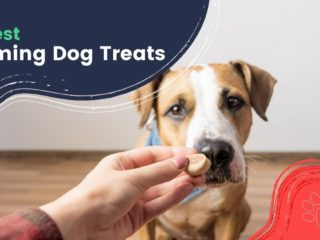 10 best Calming Dog Treats by I Love Veterinary