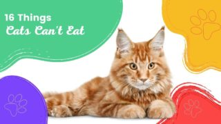 16 Things Cats can't eat - I Love Veterinary