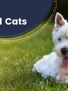 Baytril for Dogs and Cats - I Love Veterinary