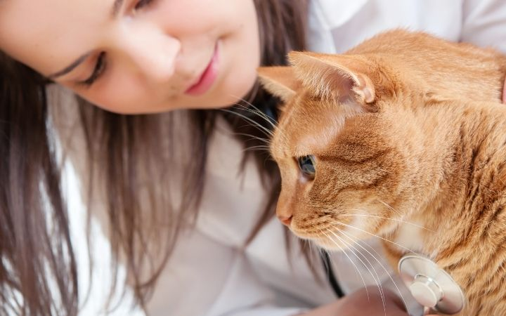Cat and vet close up - I Love Veterinary