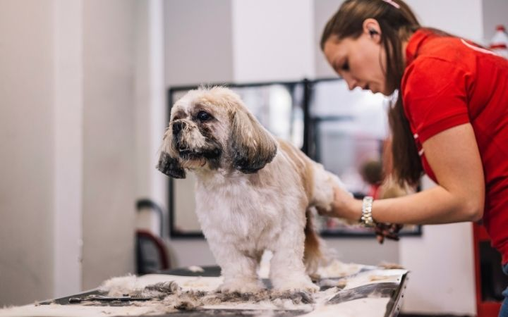 Groomer and Shi Tzu - I Love Veterinary