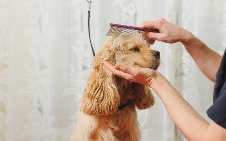 Groomer combs a dog for grooming - I Love Veterinary