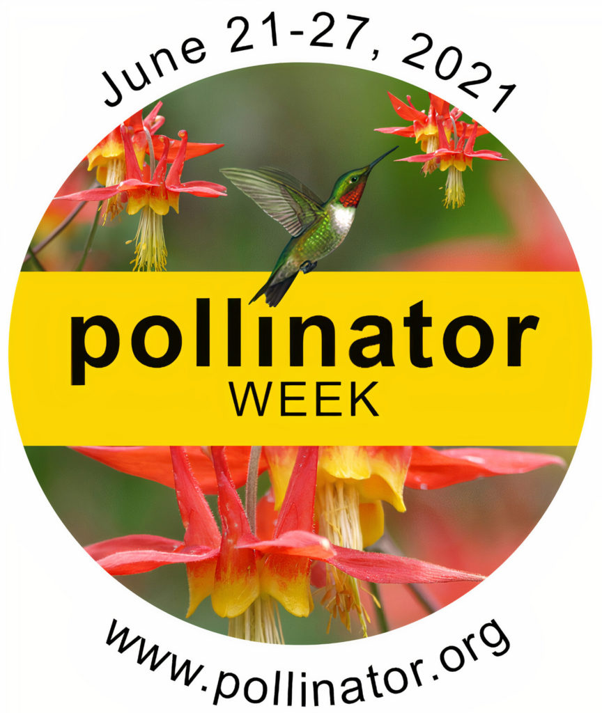 national pollinator week banner