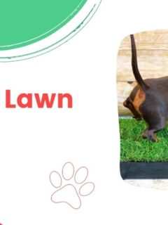 Review of Doggie Lawn by I Love Veterinary