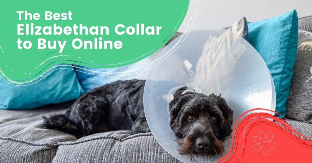 The Best Elizabethan Collar to Buy Online