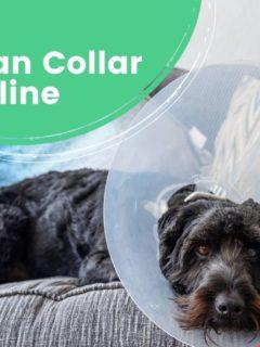 The Best Elizabethan Collar to Buy Online