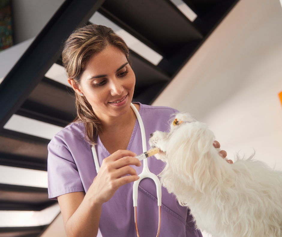 a veterinary nurse administering Trazodone for Dogs