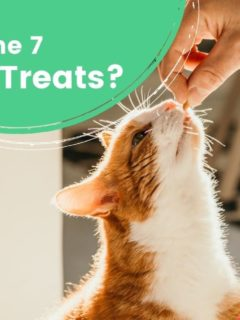 What Are The 7 best cat treats