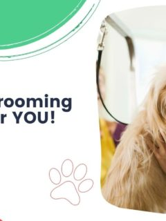 Why Dog Grooming School is for YOU - I Love Veterinary