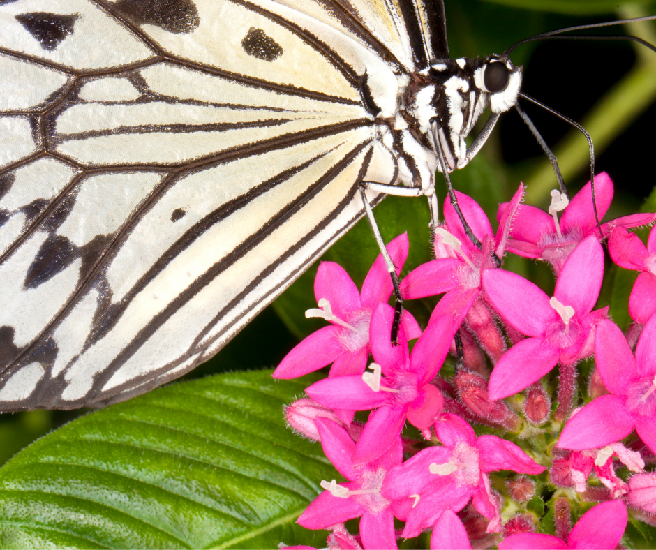 a butterfly pollinating a flower I Love Veterinary - Blog for Veterinarians, Vet Techs, Students
