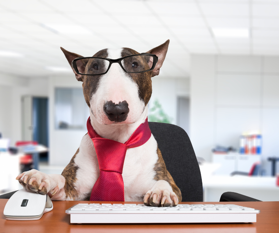 bull terrier at a laptop