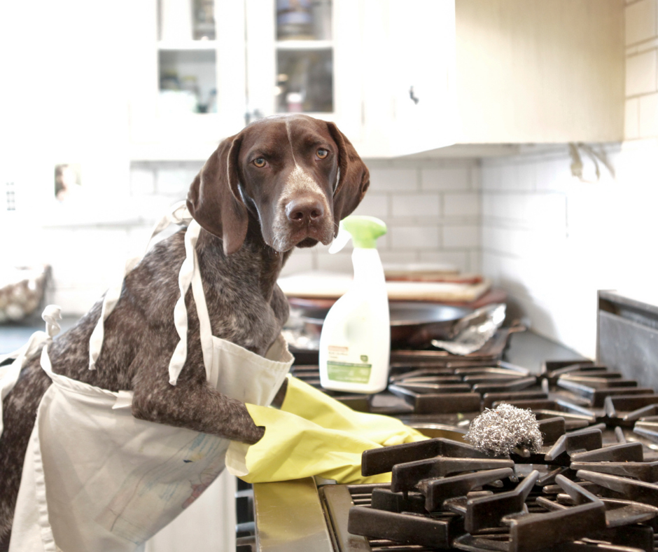 dog cleaning a stove