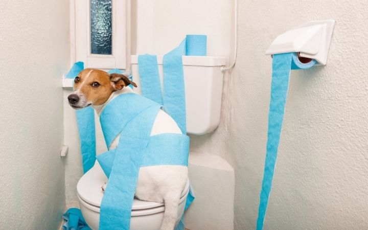 dog in toilet wrapped with toilet paper I Love Veterinary - Blog for Veterinarians, Vet Techs, Students