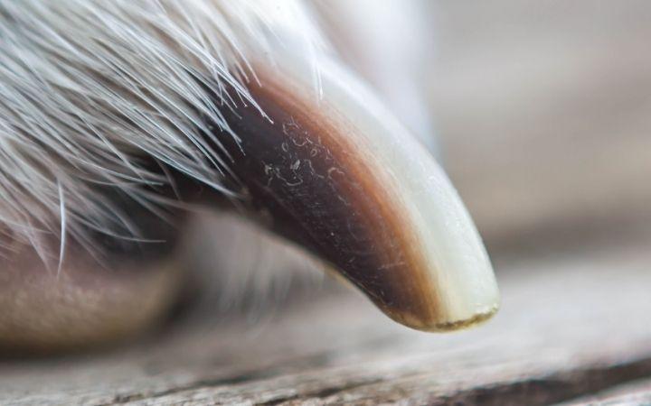 dog nails close up