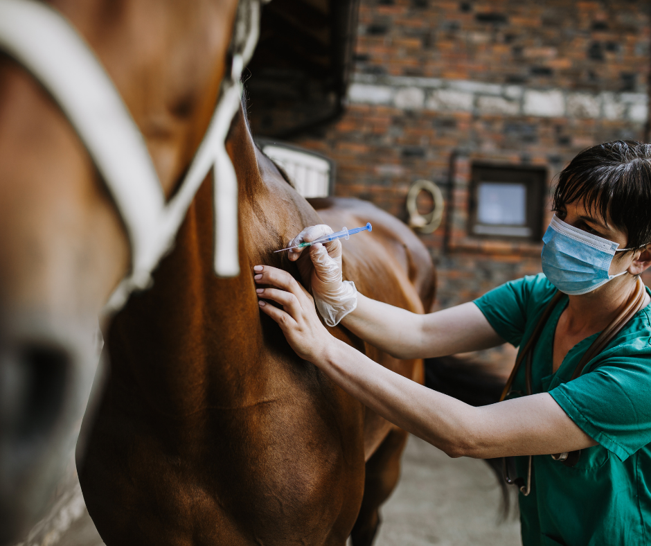 how to become an equine veterinarian