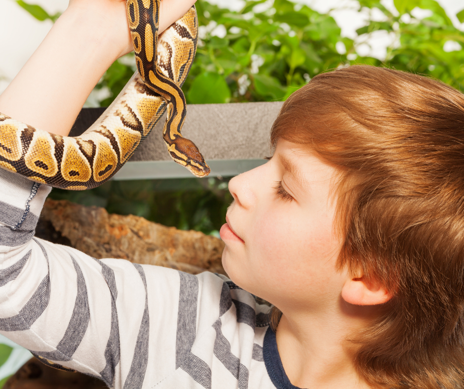 little boy and his pet snake
