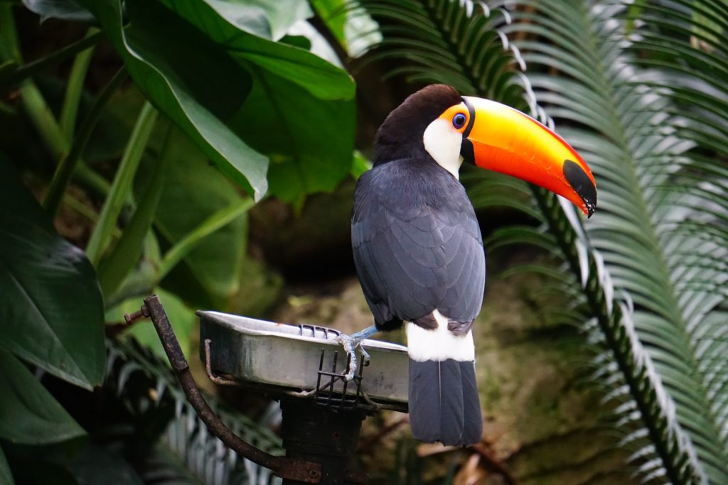 a toucan sitting on a perch