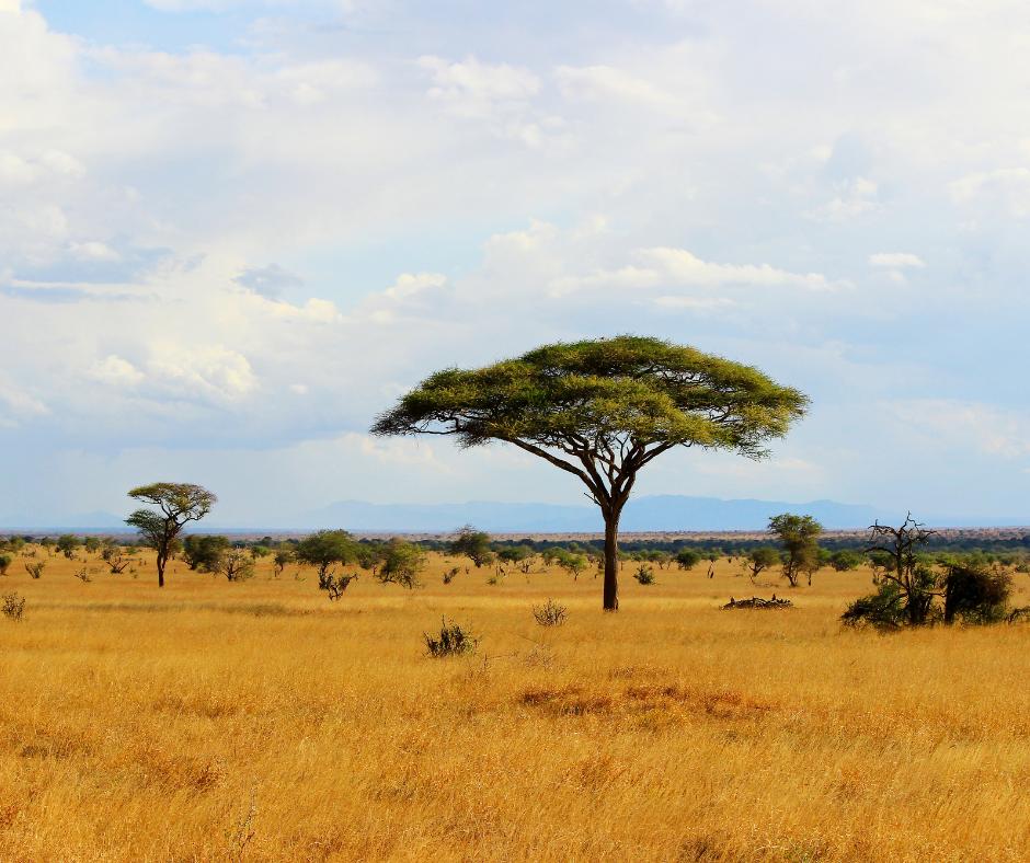 savannah plains in africa