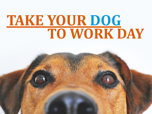 take your dog to work day banner
