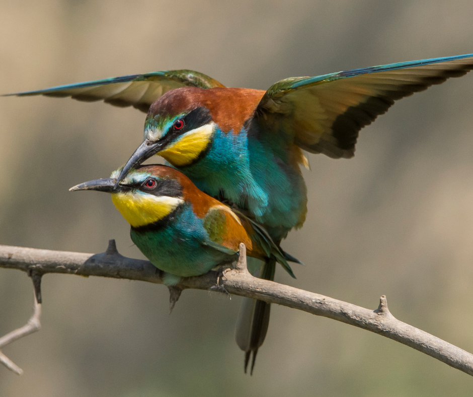 two birds mating
