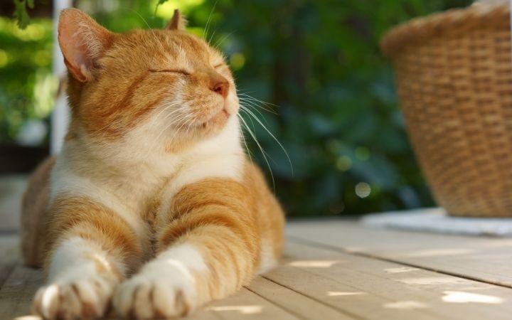 Cat relaxing outdoor - I Love Veteirnary