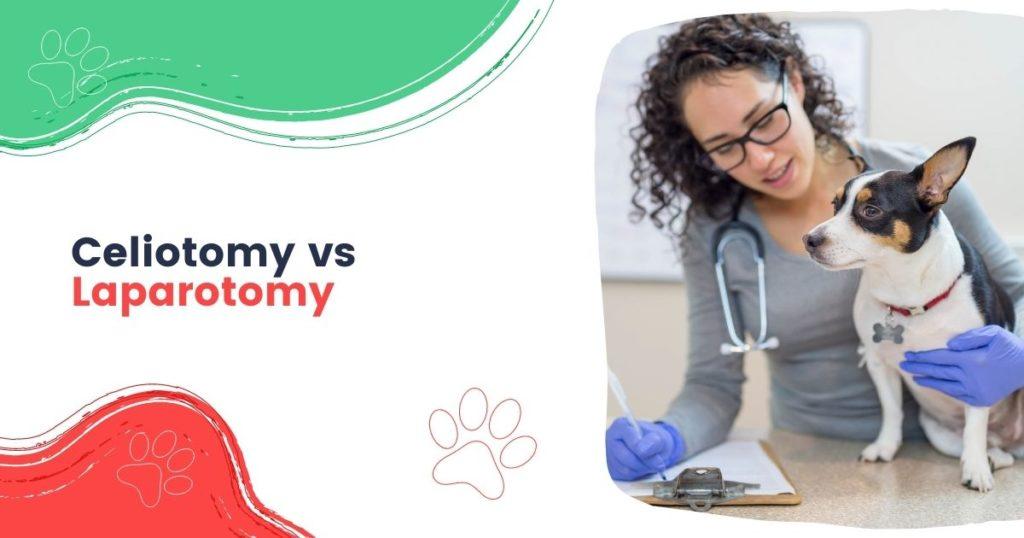Celiotomy vs Laparotomy - I Love Veterinary
