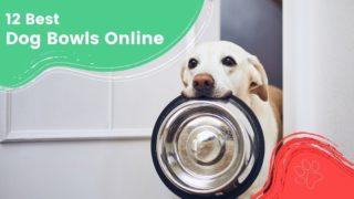 12 Best dog bowls