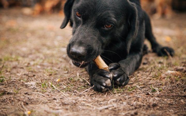 Dog eating bone - I Love Veterinary