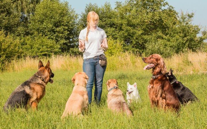 Dog trainer teaching dogs - I Love Veterinary