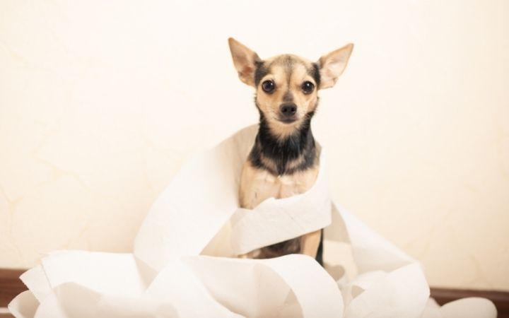 Dog with diarrhea I Love Veterinary - Blog for Veterinarians, Vet Techs, Students