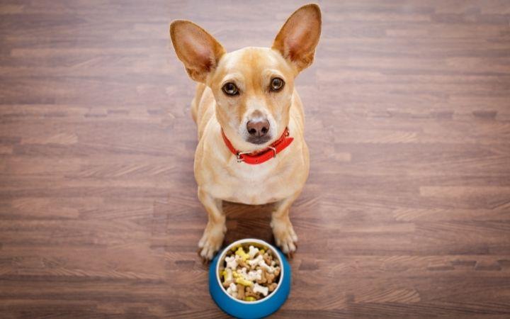 Dog with food bowl - I Love Veterinary