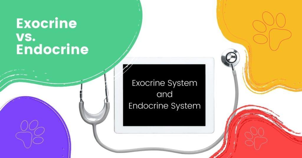 Exocrine vs. Endocrine - I Love Veterinary