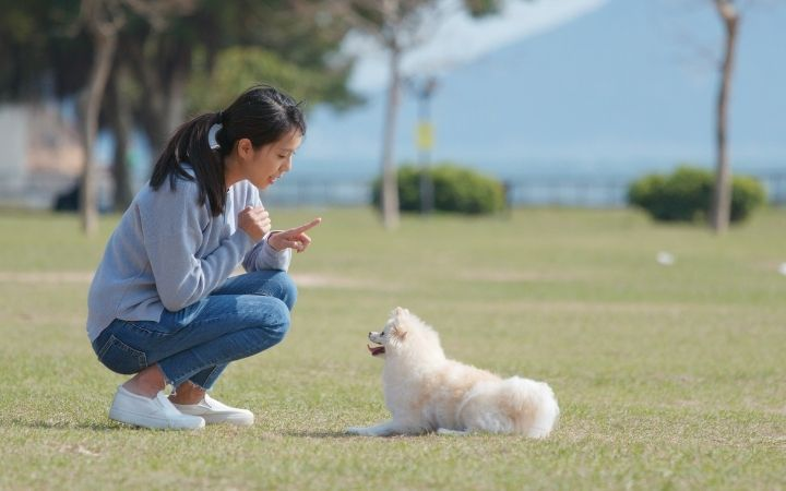 Female dog trainer training a puppy outdoors - I Love Veterinary