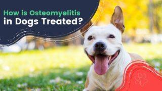 How is Osteomyelitis in Dogs Treated - I Love Veterinary