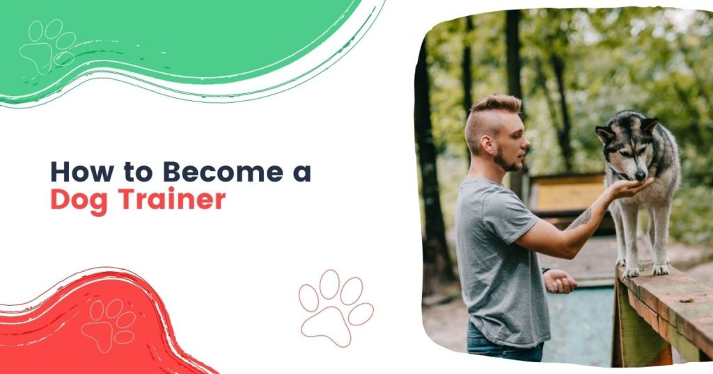 How to Become a Dog Trainer - I Love Veterinary