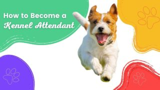 How to Become a Kennel Attendant - I Love Veterinary