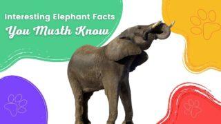 Interesting Elephant Facts - I Love Veterinary